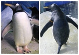 Missy and Penelope,Ireland's First Lesbian Penguins: A story for Disney